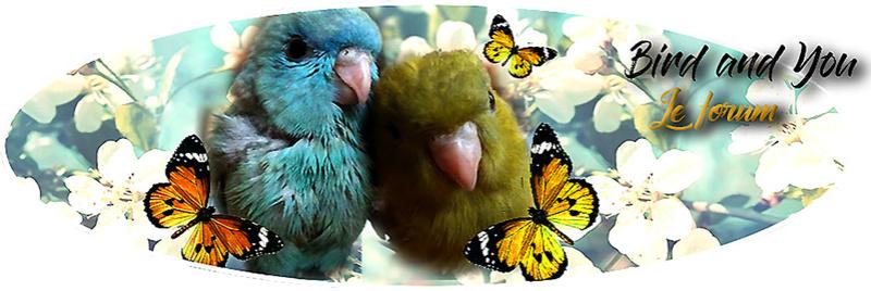 Becs crochus Bird and You