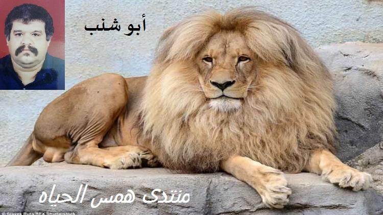 همس الحياه
