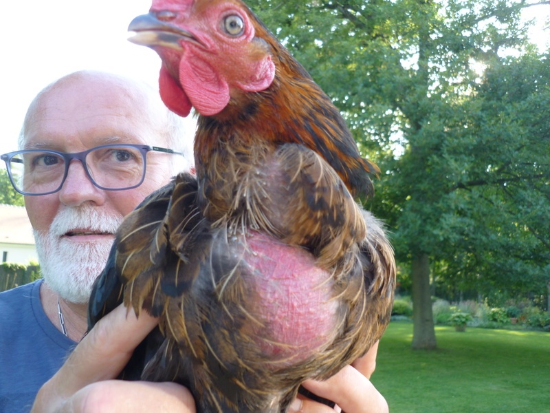 Ma poule perd ses plumes for Maladie poules perte plumes