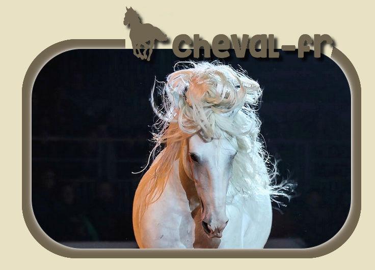 Cheval-fr