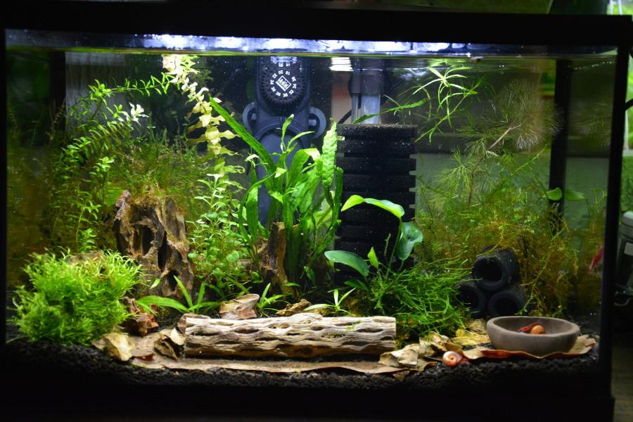 Aquarium midi pyrnes aquarium midi pyrnes petit aquarium for Petit aquarium original