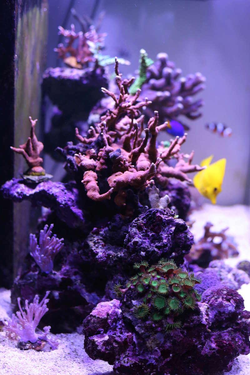 aquari13.jpg