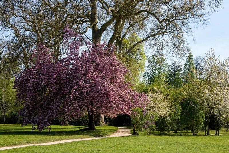 Grotte et jardin du petit trianon page 17 for Jardin anglais du petit trianon
