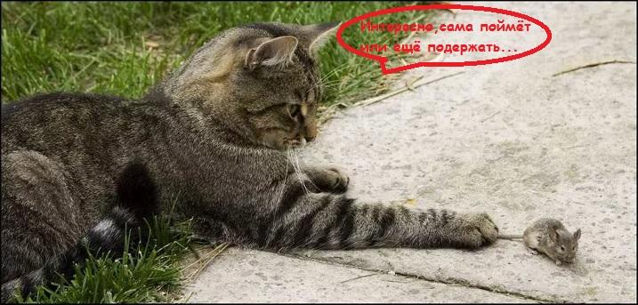 ловила кошек сонник