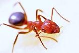 Petit monde des fourmis