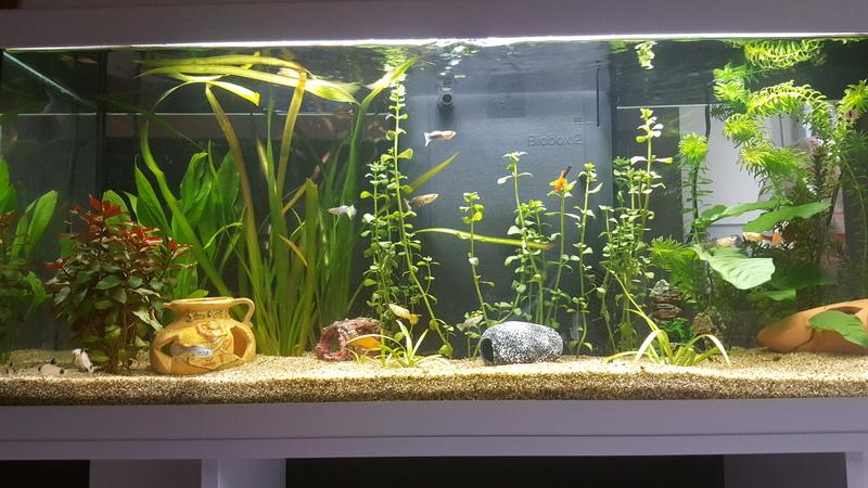 aquarium de 120 litres. Black Bedroom Furniture Sets. Home Design Ideas
