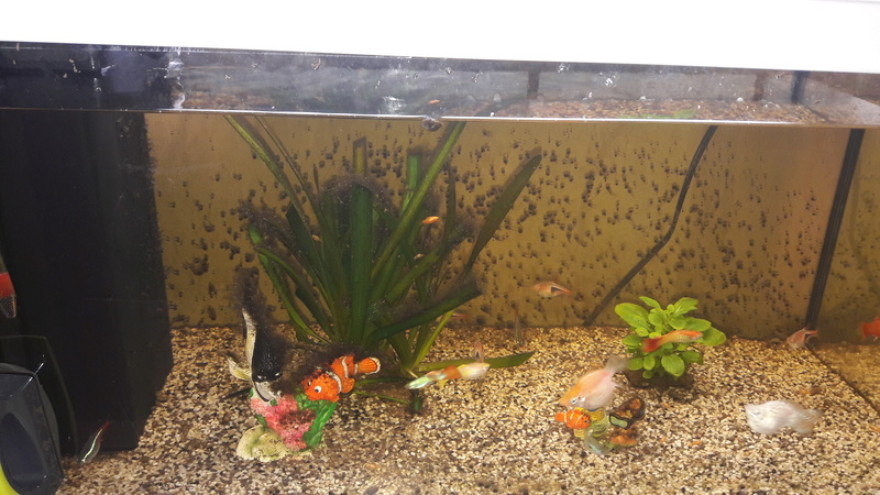 Comment Enlever Algues Sur Decor Aquarium
