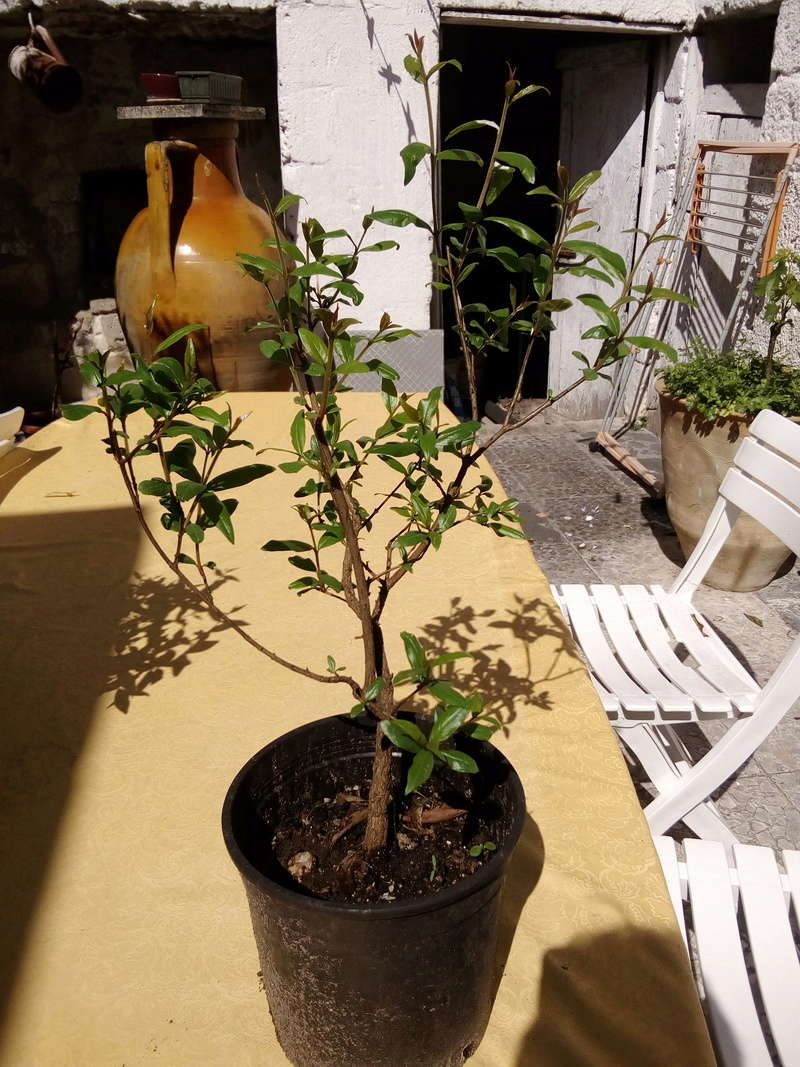 bonsai16.jpg