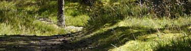 Bosquets sablonneux