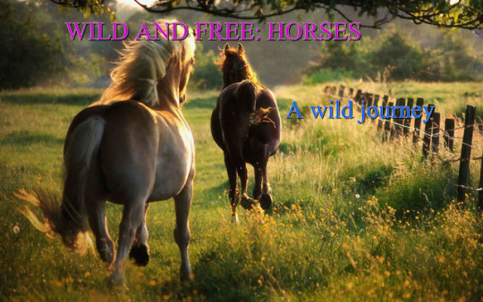 Wild And Free: Horses