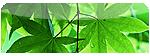 Mondo Vegetale, Piante e Fiori